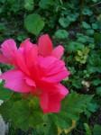Fleur1.Couvrelles 010.jpg